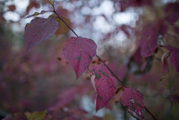 Oktober, Herfst
