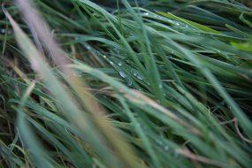 Oktober, Gras
